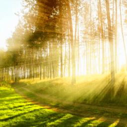 Conheça quatro dicas para afastar o estresse da sua rotina